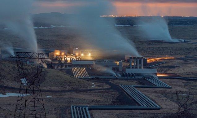 Iceland plant
